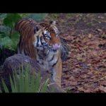 「ズートピア MovieNEX」徹底リサーチ:本物の動物たち #ディズニー #Disney #followme