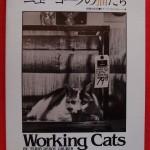 p1テリー・ドゥロイ・グルーバー【ニューヨークの猫たち】写真
