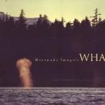 洋書・世界的な動物写真家「岩合光昭」写真集「クジラたち」