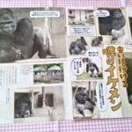 ゴリラのシャバーニ「噂のイケメン」雑誌切り抜き/東山動植物園