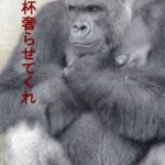 ブルーレイ版イケメンゴリラ「シャバーニ」動画&デジタル写真集