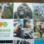 イケメンゴリラのシャバーニも★東山動物園カレンダー2016年