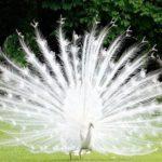 驚き!白いアニマル 神秘的なアルビノ #人気商品 #Trend followme