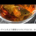 金魚型ティーバッグがかわいすぎる! #人気商品 #Trend followme