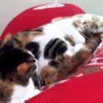 怒られたのでごまかしながら寝る猫 #人気商品 #Trend followme
