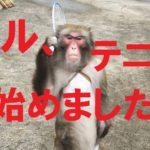 錦織圭めざして、サルがテニス始めました!MONKEY CAN PLAY TENNIS? #人気商品 #Trend followme