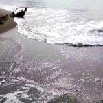 千葉県 砂浜4 #トレンド #followme